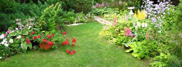 Как ухаживать за садом?