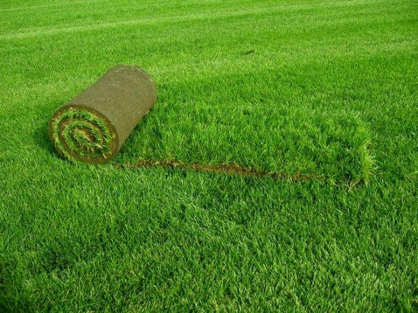 Травяной газон в ландшафтном дизайне