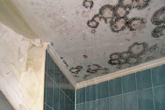 Удаление плесени в ванной комнате своими руками