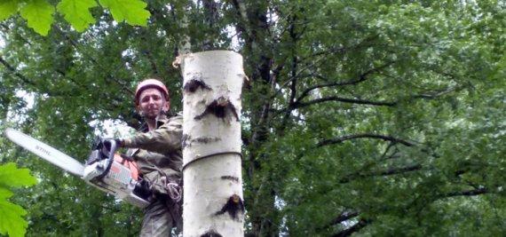 Важность проведения кронирования деревьев